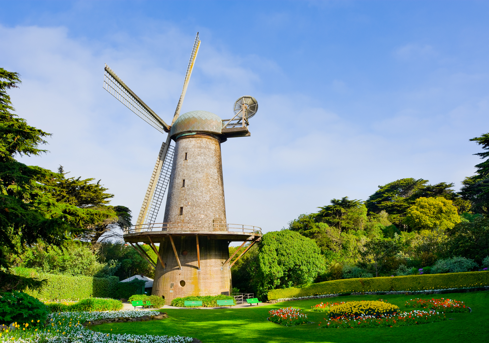golden gate park windmills tulips