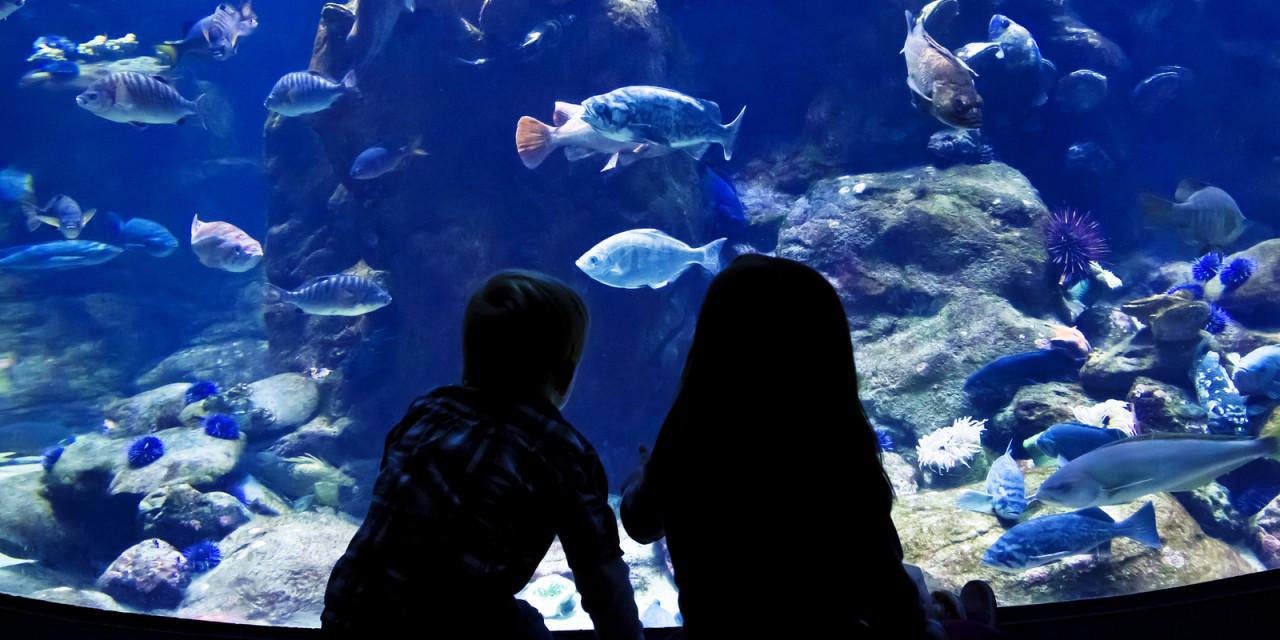 Golden Gate Park Aquarium