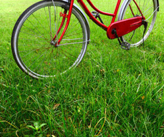 Golden Gate Park Bike Rentals
